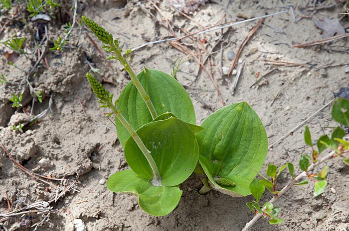 orchidées1-26