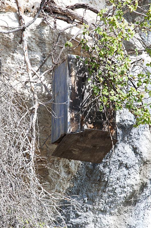 Boîte servant à récupérer les essaims d'abeilles