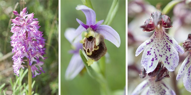 orchidées16-1-40
