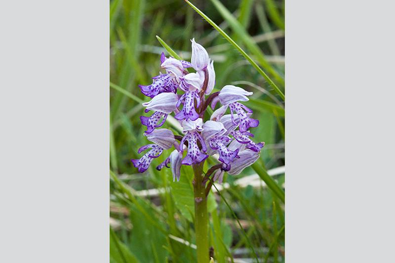 2015 - Sortie orchidées 3